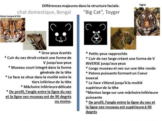 Bg vs tg petit